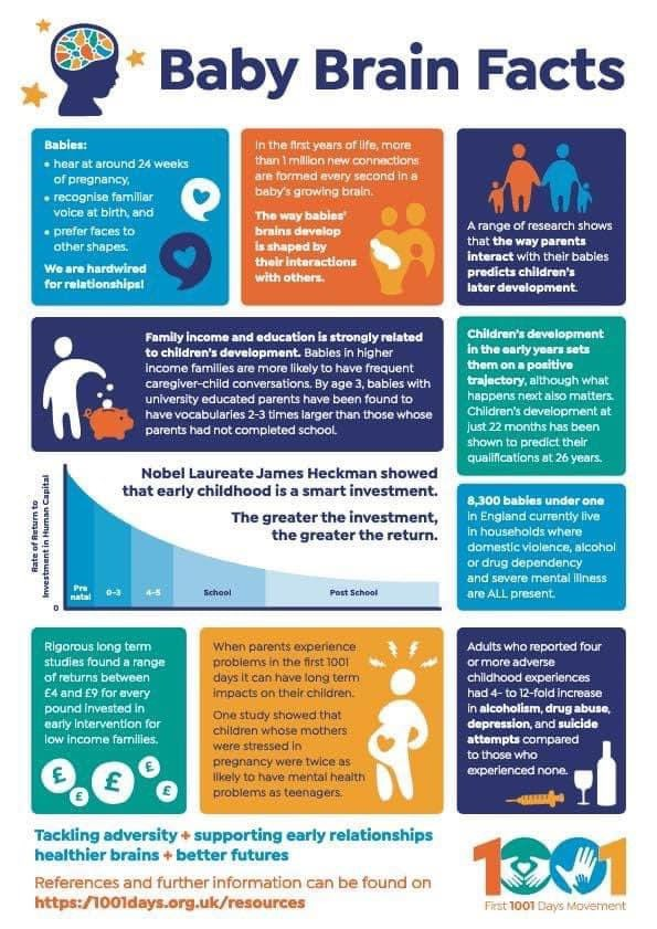 Baby Brain Facts