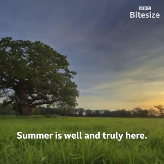 Summer Nature Challenge
